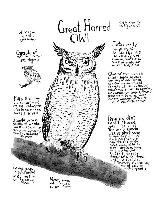 Owls_05_Great_Horned