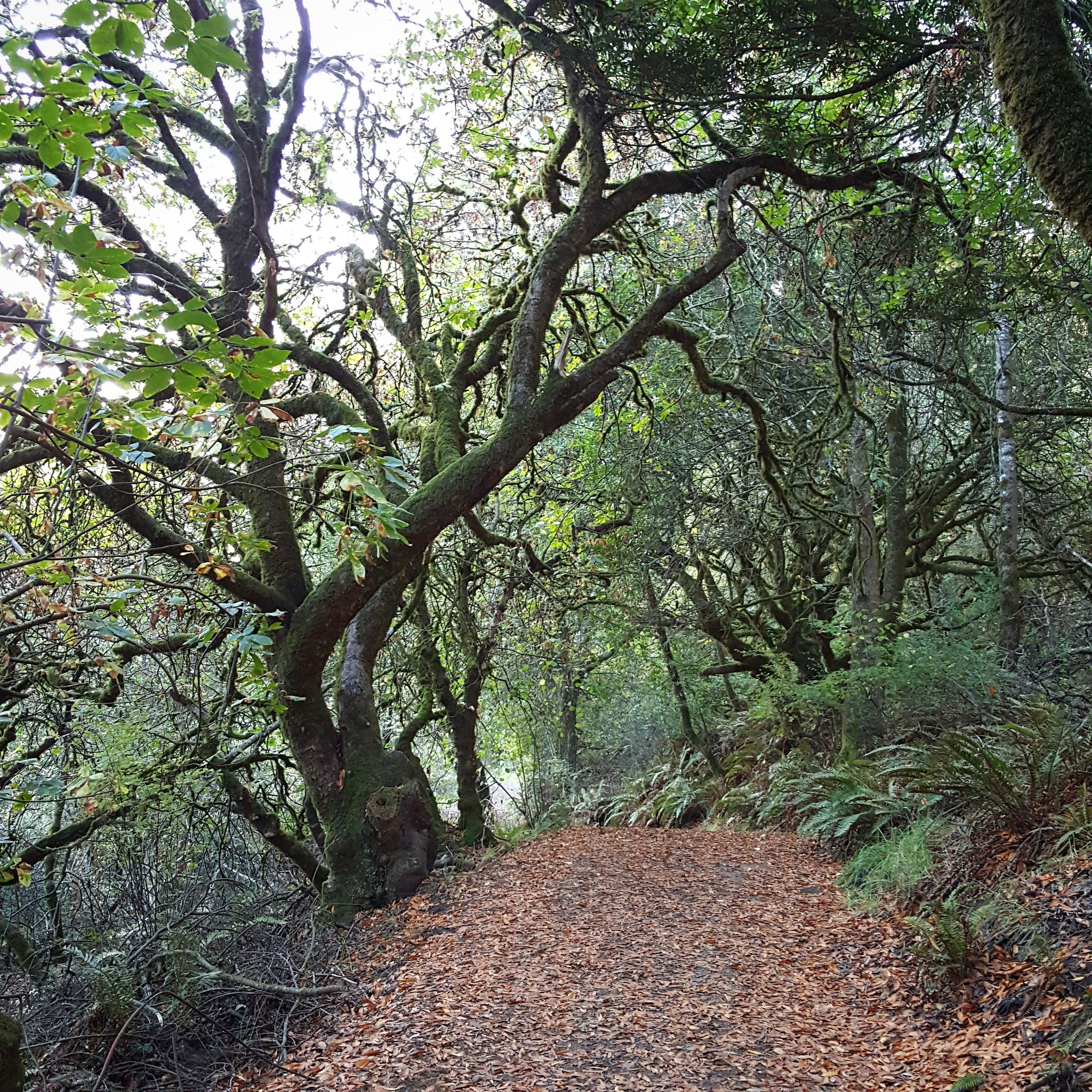 Run Through the Wood