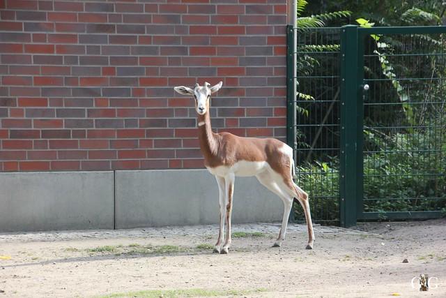Sonntags-Besuch im Tierpark Friedrichsfelde 04.10.201557