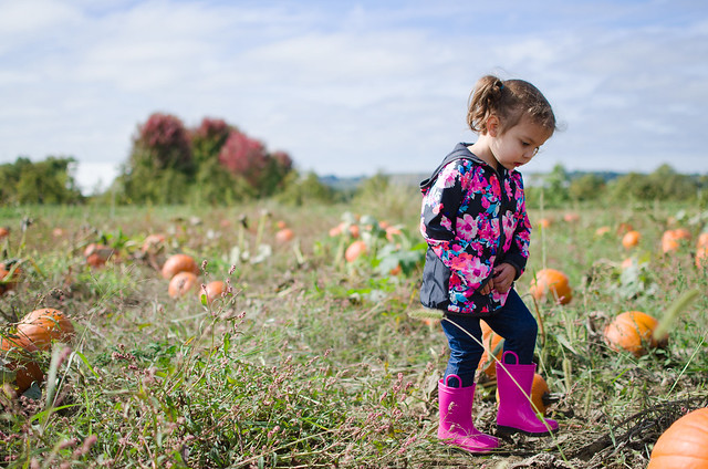 20151004-Pumpkin-Patch-1227