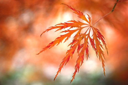 Another Autum leaf ...