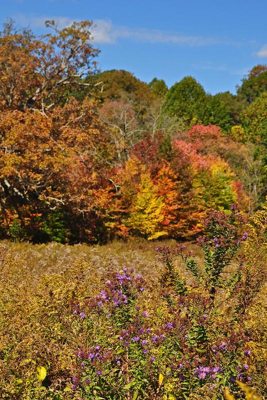 Meadow Garden (24)