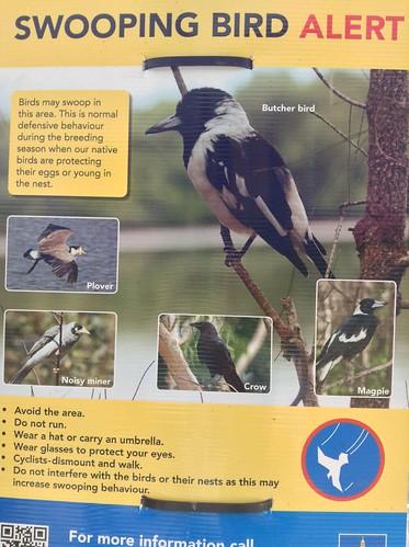 Swooping Bird Alert
