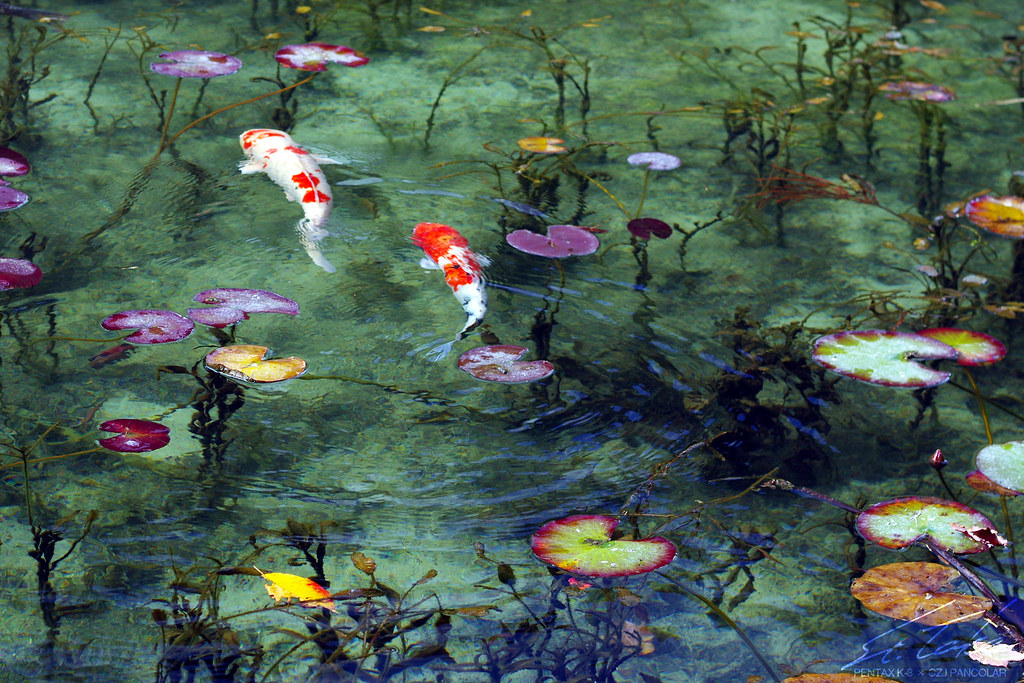 Pond of Shimone