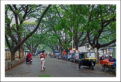 auto city people india rain garden bangalore roads karnataka