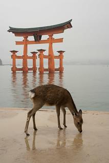 Image of Itsukushima Shrine near Miyajima. japan shrine hiroshima deer miyajima torii hightide itsukushimajinja