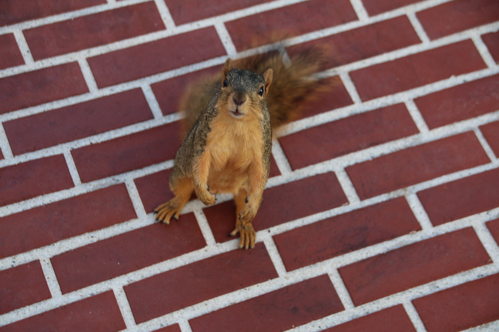 128/365/3050 (October 17, 2016) - Squirrels in Ann Arbor at the University of Michigan (October 17, 2016)