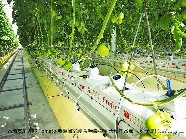番茄方舟 ARK Tomato 玻璃溫室農場 無毒種植 天使串番茄 25