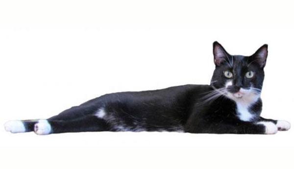 lost-florida-cat-in-alaska