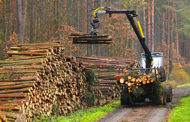 Deforestation12