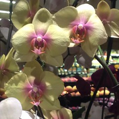 I'm always waiting for orchids to break into song. #disneyscrewedmeup, #anthropomorphizing, #ineedmoresleep