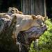 Cincinnati Zoo 8-20-15-8566 by joemastrullo