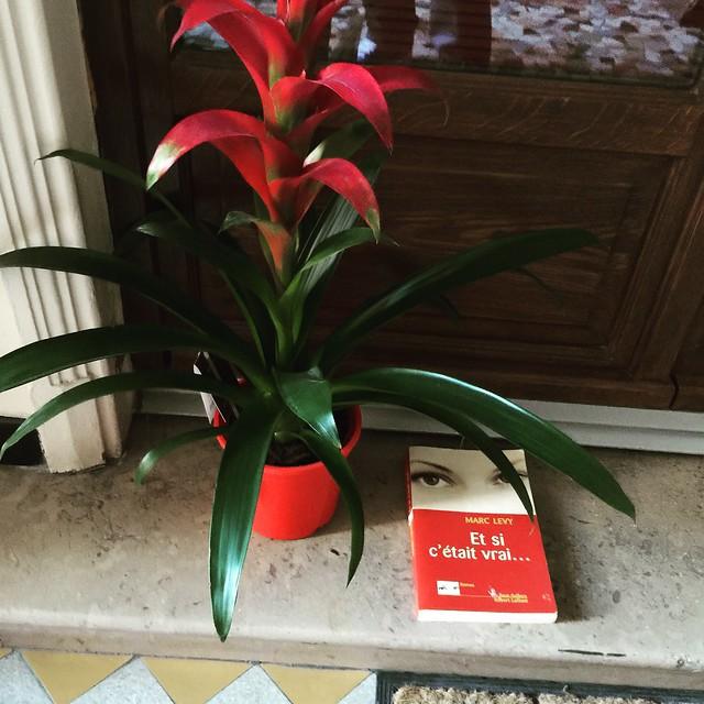 Marc Levy belle plante