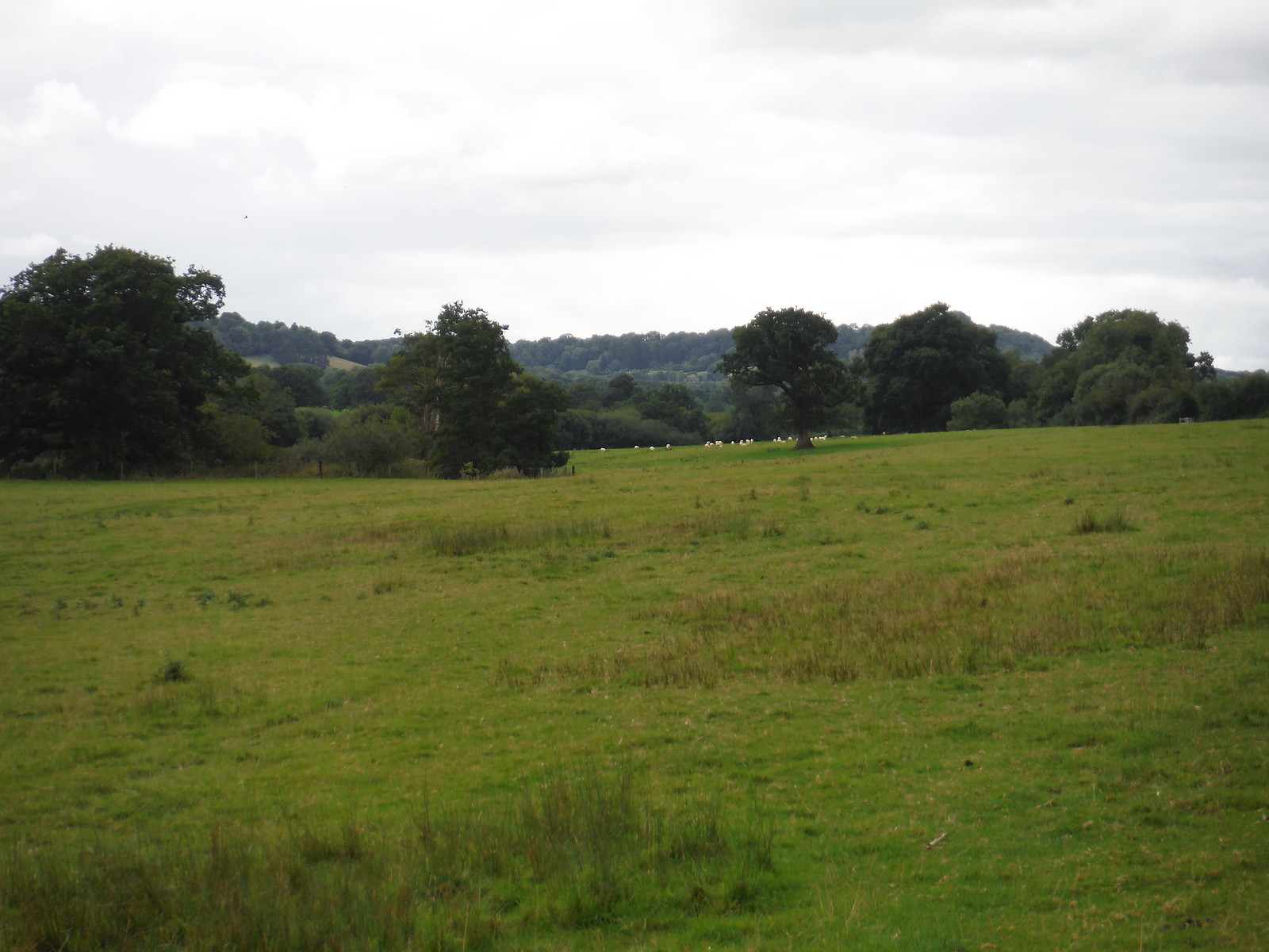 Long Meadow by the Nadder SWC Walk 251 Tisbury Circular via Ludwell and Berwick St. John