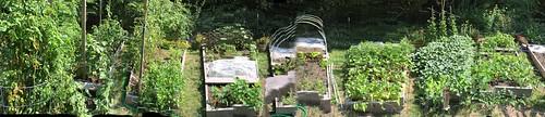 garden panorama IMG_2865