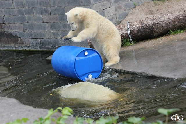 Zoo Rostock 19.09.201542