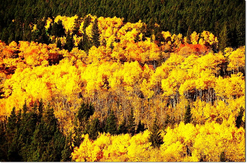Fall colors by Peak to Peak HWY, Colorado  (1)