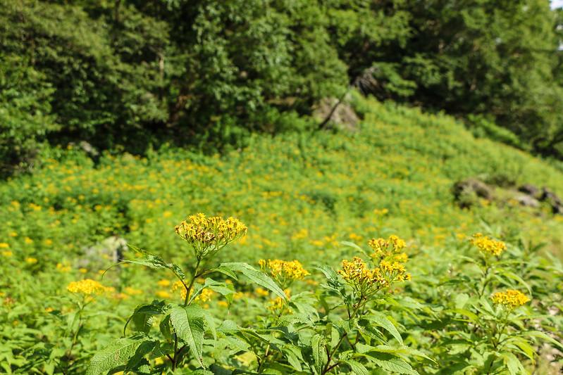 2014-08-24_00102_日光白根山.jpg