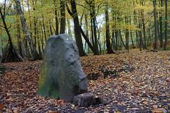 5459  L'automne dans la forêt de Meudon