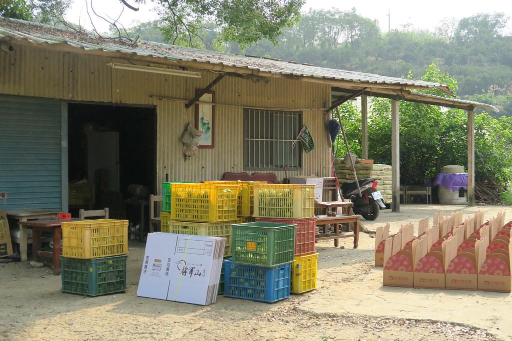 台南市白河區將軍山農場 (8)
