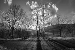 Tree Backlight