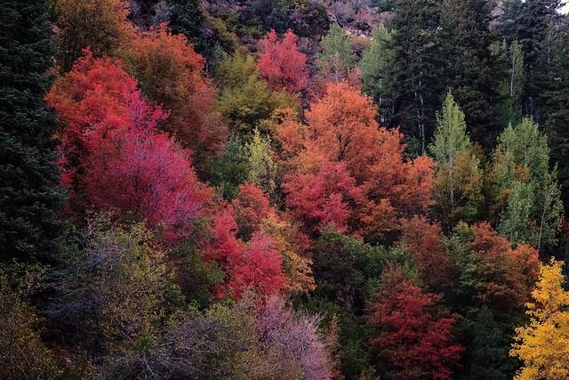 autumn leaves - Big Cottonwood Canyon - 9-24-16  01  Explore!