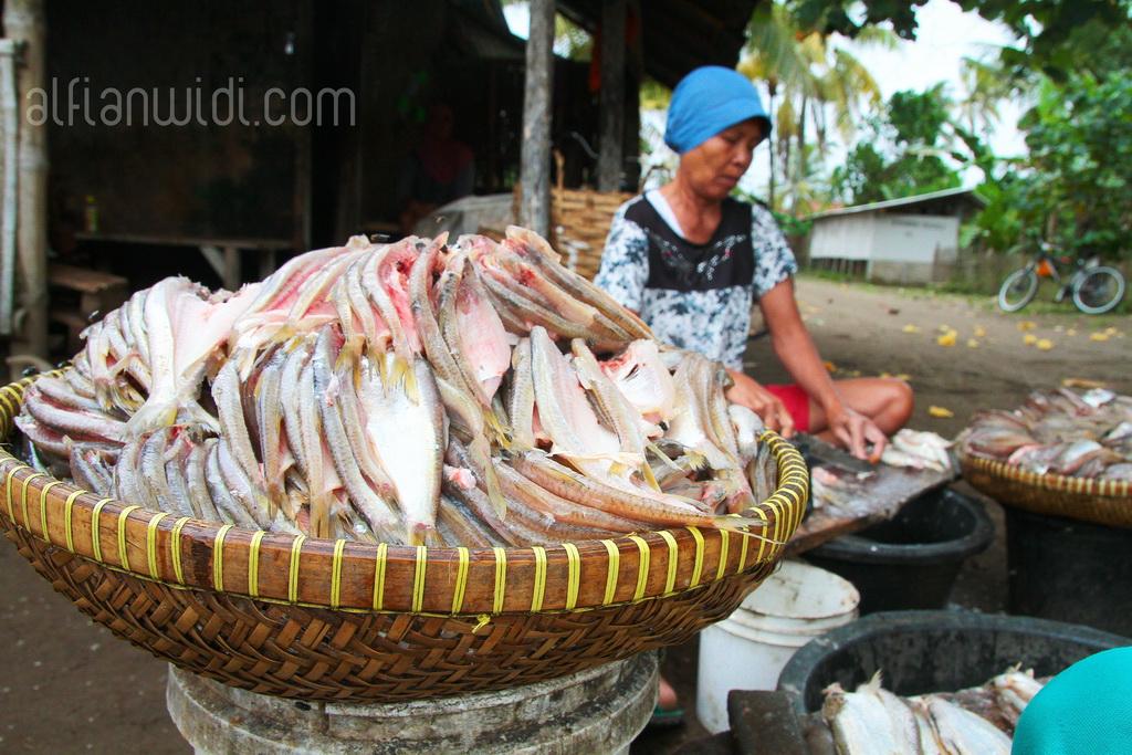 5.Ikan asin siap digarami dan dikeringkan.