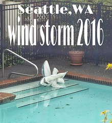 This is what's left behind.. #king5seattle #king5fall #windstorm2016 #windstorm2016seattle #wind #windbreaker