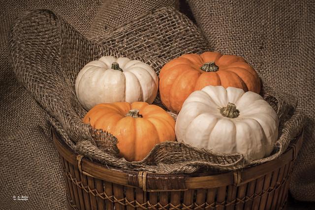 Calabazas de Otoño /  Fall pumpkins