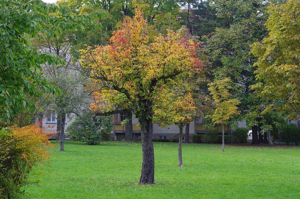 Hof im Herbst