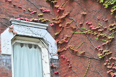 Window_ivy
