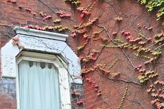 Window_ivy