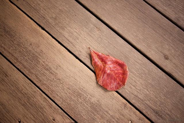 Leaf on wood