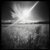 Sunsplashed field in IR