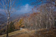 七ッ石山を下りブナ坂へ