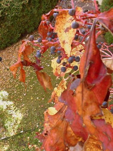 Balkon im Herbst