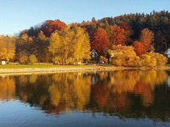 #Indian #Summer am #Wallersee  #visitsalzburg #visitaustria #visitneumarktamwallersee #Herbst #Blätter #Farben #nature #lake  #wohnblogAt