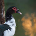 Muscovy with dancing light by Emanuel Papamanolis