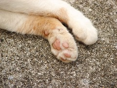 Paw of a cat
