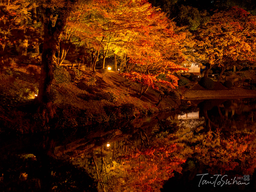 縮景園 もみじまつり 2015 (Night of the Shukkeien Garden)
