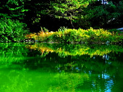 Japanese Garden and Pond. Reflection
