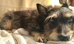 Sick Puppy 😟