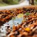 Autumn again by jimiliop