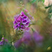 Garden rays by Franci Van der vyver (Carmen Tulum)