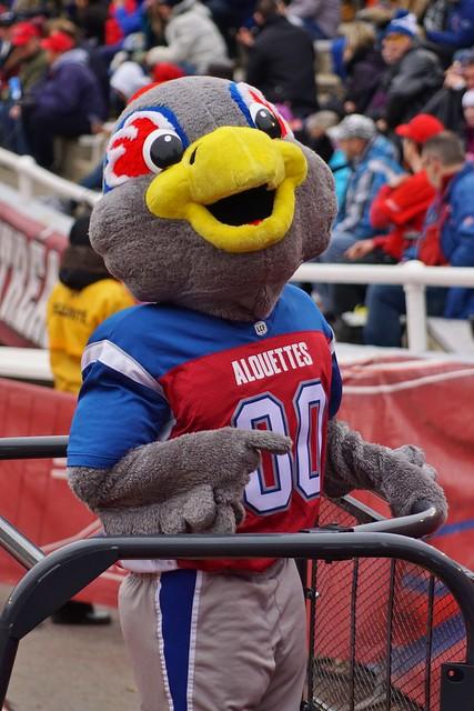 Football, Touché, Alouettes Mascot, Montréal Alouettes VS Calgary Stampeders, Sony A77 MK 2, Montréal, 30 October 2016 (27)