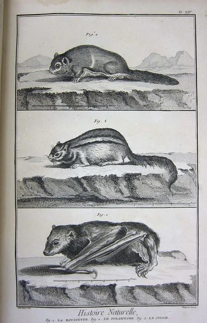 diderot bat