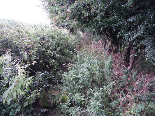 Often overgrown path in Oddford Vale