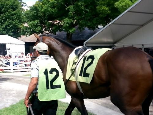Saratoga Springs Race Track (15)