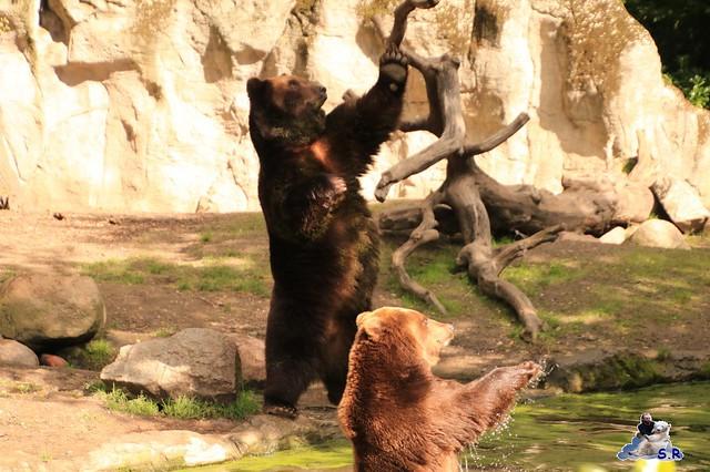 Tierpark Hagenbeck 27.09.2015 011