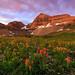 Timpanookie Meadow by Joh nny1
